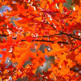 Alexander Senin - Blazing Maple