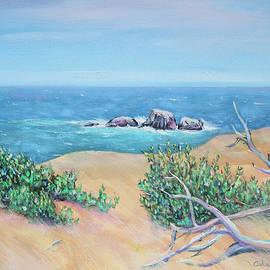 Bleached Cedar and Ocean Rocks