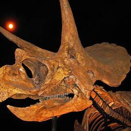 Connie Fox - Blind Date. Triceratops Horridus