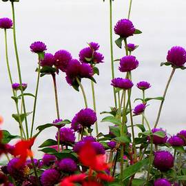 Gardening Perfection - Bliss