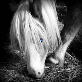 Kathy Barney - Blonde Blue Eyes Mini