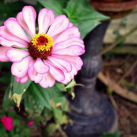 Faith Williams - Bloom