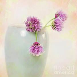 Carolyn Rauh - Blooming Chives