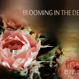 Beverly Guilliams - Blooming in The Desert