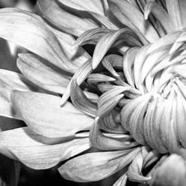Jerri Moon Cantone - Blooming