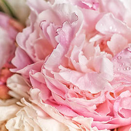 Zina Zinchik - Blooming pink peonies