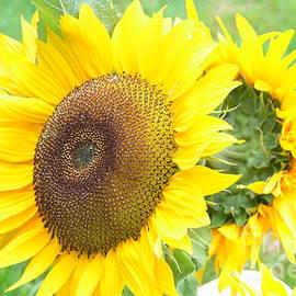 DejaVu Designs - Blooming Sunflowers