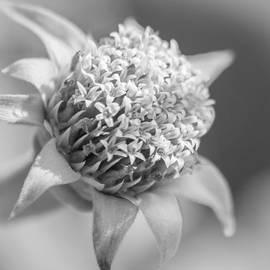 Carolyn Marshall - Blooming Weed