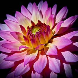 Athena Mckinzie - Blossoming Flower