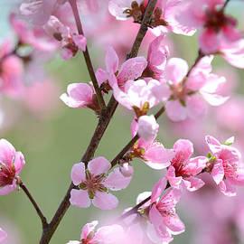 Melanie Moraga - Blossoming Hillside