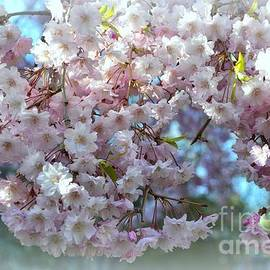 Miriam Danar - Blossoming Tree - Early Spring