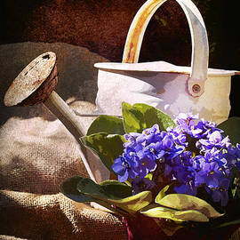 Phyllis Denton - Blue African Violet