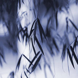 Tim Gainey - Blue Bamboo