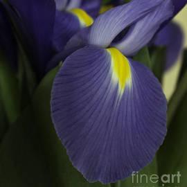 Arlene Carmel - Blue Beauty