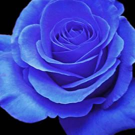 Brenda  Spittle - Blue Beauty