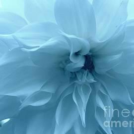 Photographic Art and Design by Dora Sofia Caputo - Blue Beauty - Dahlia