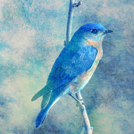Maggie Vlazny - Blue Bird Blue Sky