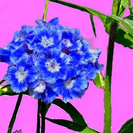 Bruce Nutting - Blue Blossom