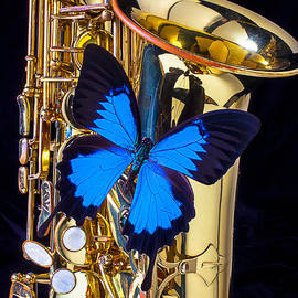 Garry Gay - Blue butterfly on sax