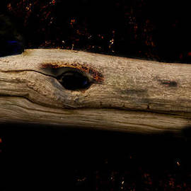 Clive Beake - Blue Crested Wood Dragon