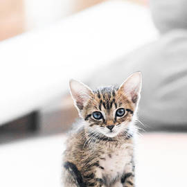 Shelby  Young - Blue Eyed Kitten