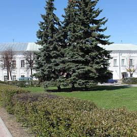 Evgeny Pisarev - Blue firs