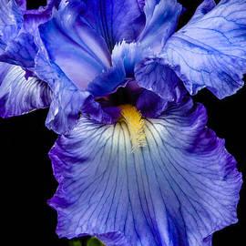Robert Bales - Blue Flag