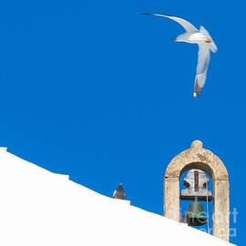 Edgar Laureano - Blue Gull