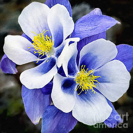 Dr Bob and Nadine Johnston - Blue Flowers Desire Love and