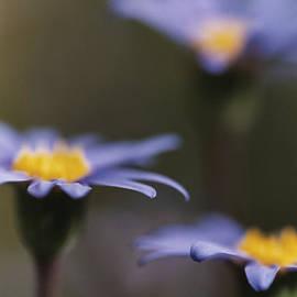 Caitlyn  Grasso - Blue Haze