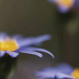 Caitlyn  Grasso - Blue Haze II