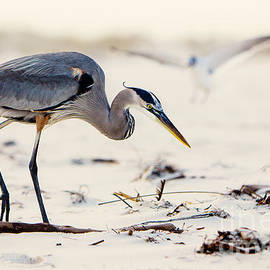 Joan McCool - Blue Heron at the Beach