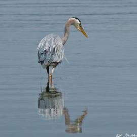 Jeff Goulden - Blue Heron Hunting in Puget Sound