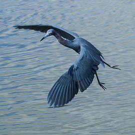 Benjamin Andersen - Blue Heron Landing