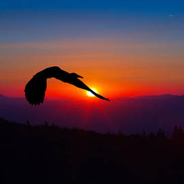 John Haldane - Blue Heron Rising with the Sun