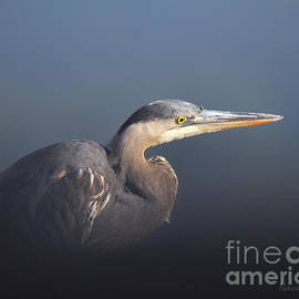Nava  Thompson - Blue Heron Waiting