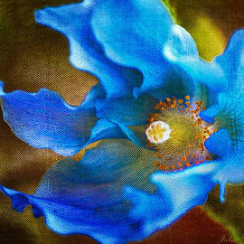 Julie Palencia - Blue Himalayan Poppy