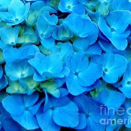 Kathleen Struckle - Blue Hydrangea