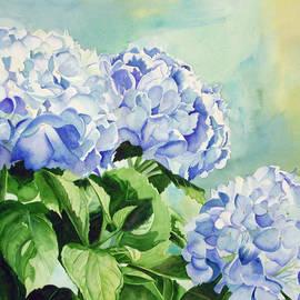Elizabeth  McRorie - Blue Hydrangeas