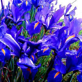 Gardening Perfection - Blue Iris