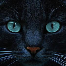 Joachim G Pinkawa - Blue Is The Night