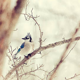 Karol  Livote - Blue Jay Winter
