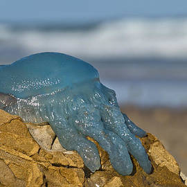 Kevin Chippindall - Blue Jellyfish 02