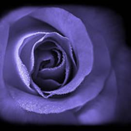 Jennie Marie Schell - Blue Lavender Violet Roses Triptych