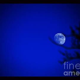 Susanne Still - Blue Moon Rise