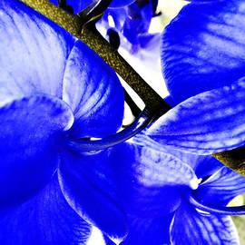 Nancy E Stein - Blue Orchid 2