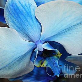 Photographic Art and Design by Dora Sofia Caputo - Blue Orchid