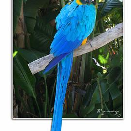 Mariarosa Rockefeller - Blue Parrot