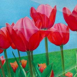 Pamela Clements - Blue Ray Tulips