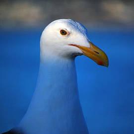 Debra Thompson - Blue Seagull